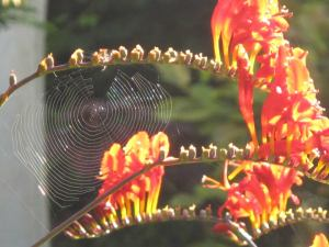 nature spiders web
