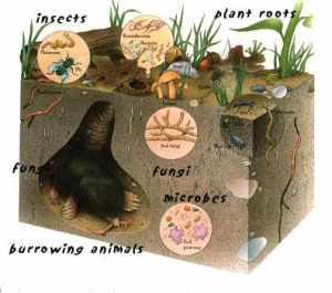 easter soil-life